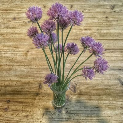 Chives can be very decorative...... Blooming Decoration Simplicity Check This Out HDR The Art Of Nature Getting Inspired EyeEm Nature Lover Enjoying Life Everyday Joy