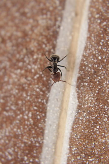 A picture or a little friend here Animal Wildlife Ant Close-up Day Insect Nature No People One Animal Staring Staring At Me Tiny