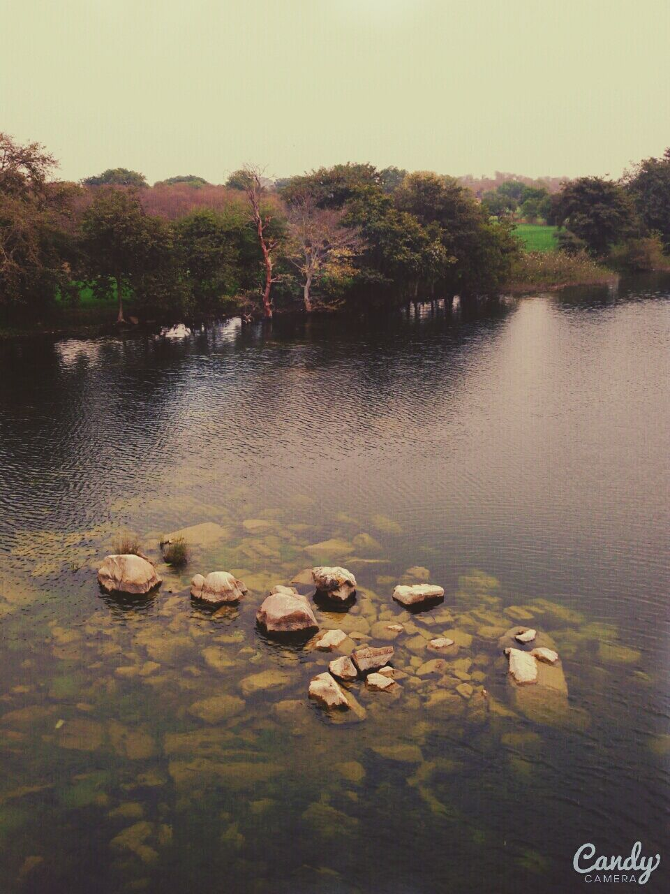 water, lake, nature, no people, tree, tranquility, day, outdoors, waterfront, beauty in nature, scenics, animal themes, sky