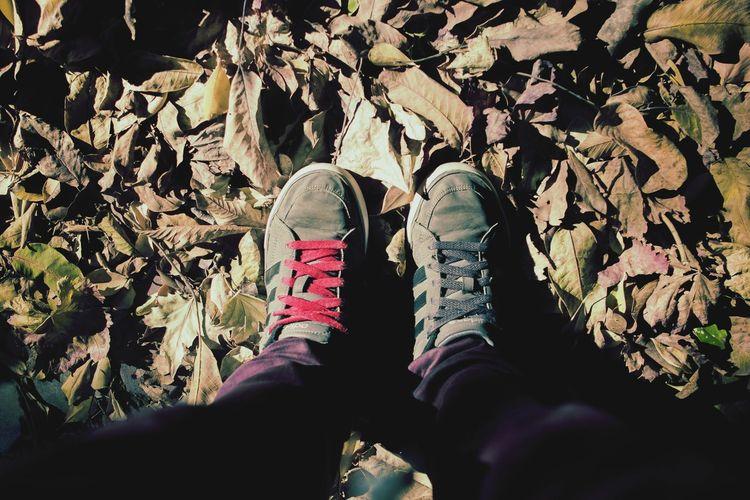 Camina. IfYouLeave Adidas Adidasoriginals Cordones Cordonesdecolores Caminar Zapatillas Zapatillascustomizadas Hojas Secas Naturaleza Otoño Pies Piernas Urbanstyle Perspective Photography PerspectivasInteressantes Mivision Nature Human Leg Shoe Personal Perspective Human Foot Human Feet Footwear