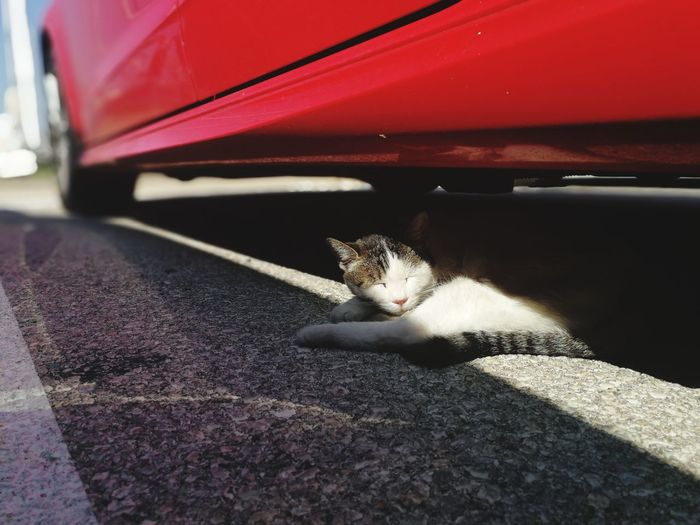 Sun Sunshadow Stray Cat Red Car Cat Under The Car Cat Sun Bathing Pet Portraits Croatia Krk  Cat Domestic Cat Pets One Animal Domestic Animals Animal Themes Car Transportation Feline Mode Of Transport Red Land Vehicle Day Mammal No People Close-up Outdoors Car