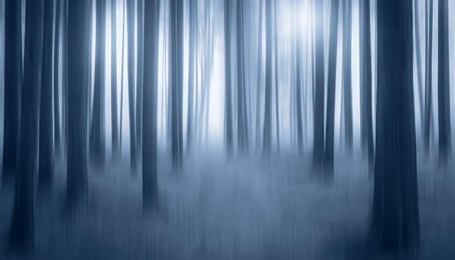Mysterious tree trunks in the light, with blurred motion Abstract Motion Fog Gray Blue Blurred Motion Nature Shiny Dark Softness Forest Tree Trunk Trees Schwäbische Alb Baden-Württemberg  Art Artistic Black And White Light Mystery Mysterious Dreamy Fairytale  Landscape Nature