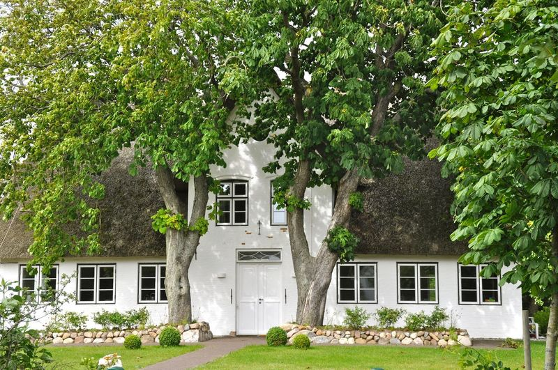 Architecture Building Exterior Built Structure Façade House House Facade Outdoors Sky Street Photography Window Germany Tree Garden Thatch Thatched Roof Thatched Cottage Thatched House Thatched Sylt Island Island Life My Favorite Place