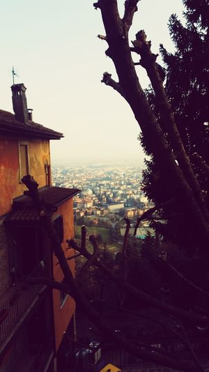 Trees Ingombrante Bel Paesaggio Discover Your City Cityscapes Bergamo Italia Città Alta BG Heartbeat Moments From My Point Of View House