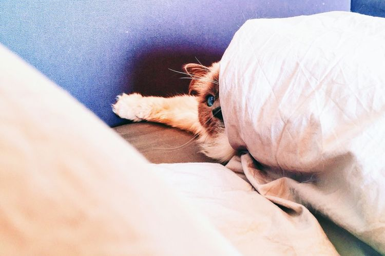 Not quite ready for morning Cat Bed Cozy Sleepy Pets Duvet Day Cute Cute Pets Cats Sleep Sleepyhead Peekaboo Lazy Lazy Day Morning