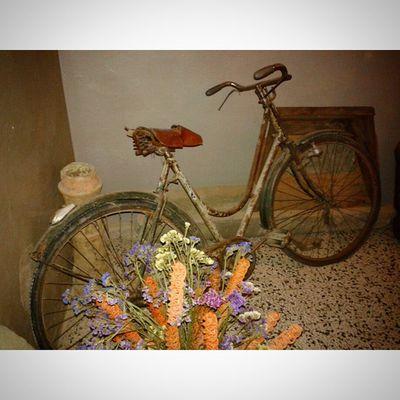 Igersmodena Igersitalia Igersbologna Biciclette Bike Ritorniamoalfuturo