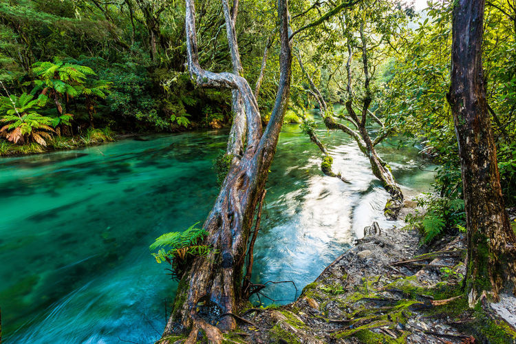 Flowing Water Flowing Water In A Creek Nature Tranqual Scene Tranquility Tree Beauty In Nature Blue Water Foliage Forest River Tarawera