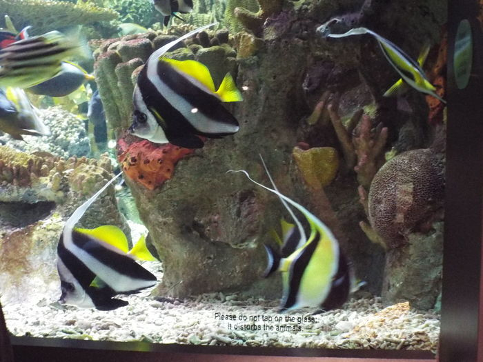 Blackandwhite Fish Market Freshness Multi Colored Nature New England Aquarium  No People Stripper Life Tranquility