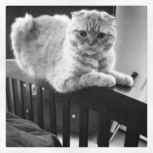 Balancing Trollcat