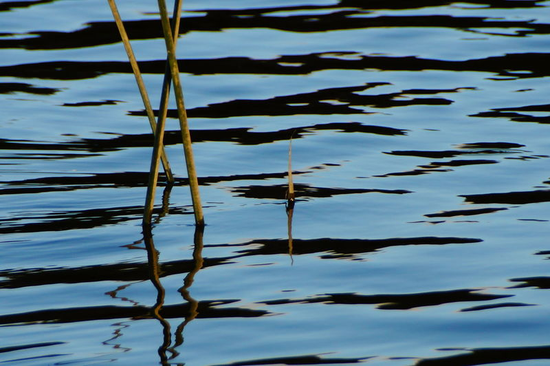 Reeds Animal Themes Beauty In Nature Close-up Day Lake Leaf Nature Nature No People Outdoors Plant Reeds Reflection River Tranquility Water Water Reflections Waterfront