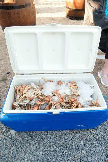 Crab Crab -