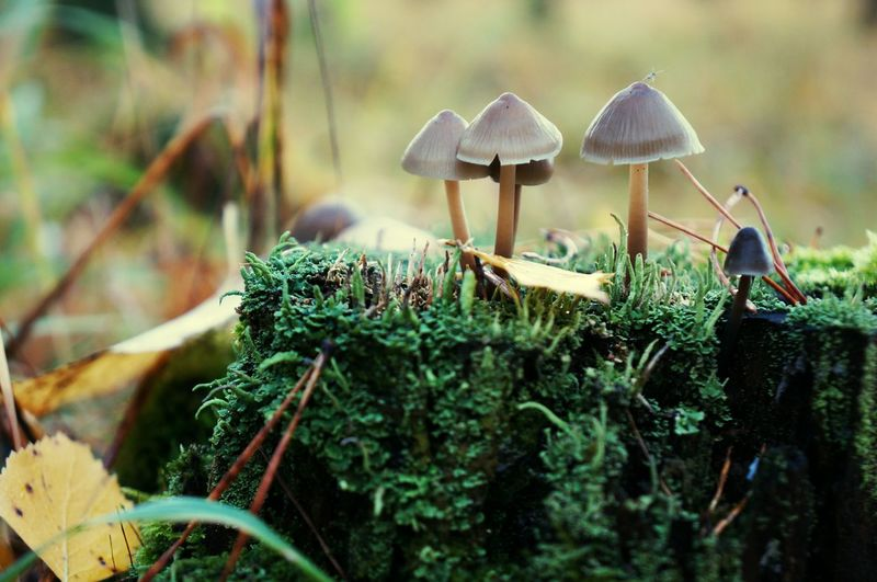 Close-Up Of Mushrooms Growing At Forest