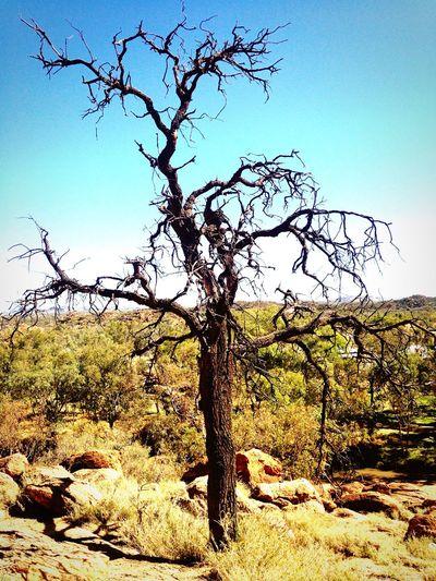 Crooked tree on