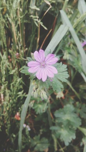 Flower Head Flower Growth Petal Outdoors Blooming Close-up Beauty In Nature Purple