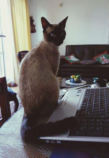 Dali, chat fou.