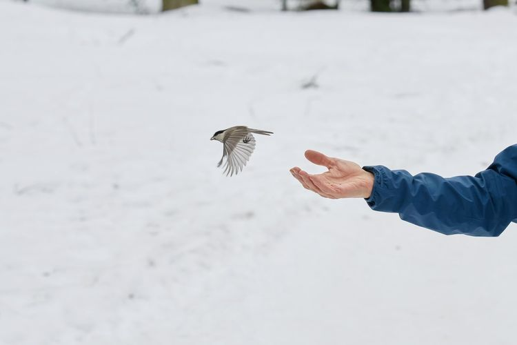 Person flying bird during winter