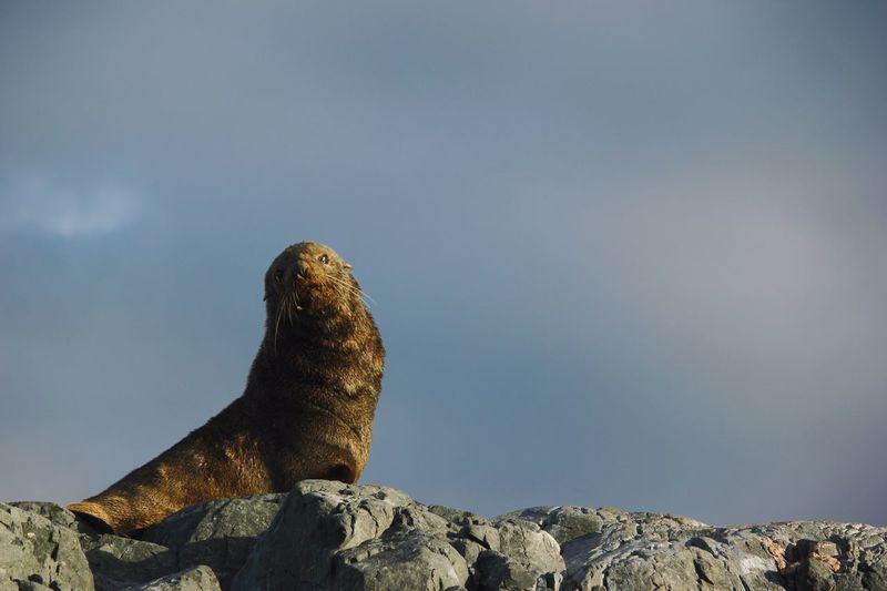 High angle view of sea on rock