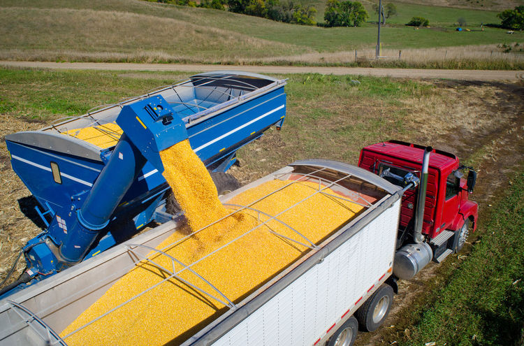 Golden Cereal EyeEmNewHere Farm GMO South Dakota Aerial View Agriculture Corn Crop  Energy Ethanol Farm Equipment Farming Field Food Grain Harvest Kernels Rural Scene Truck