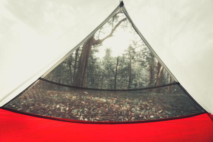 Tree Glass -