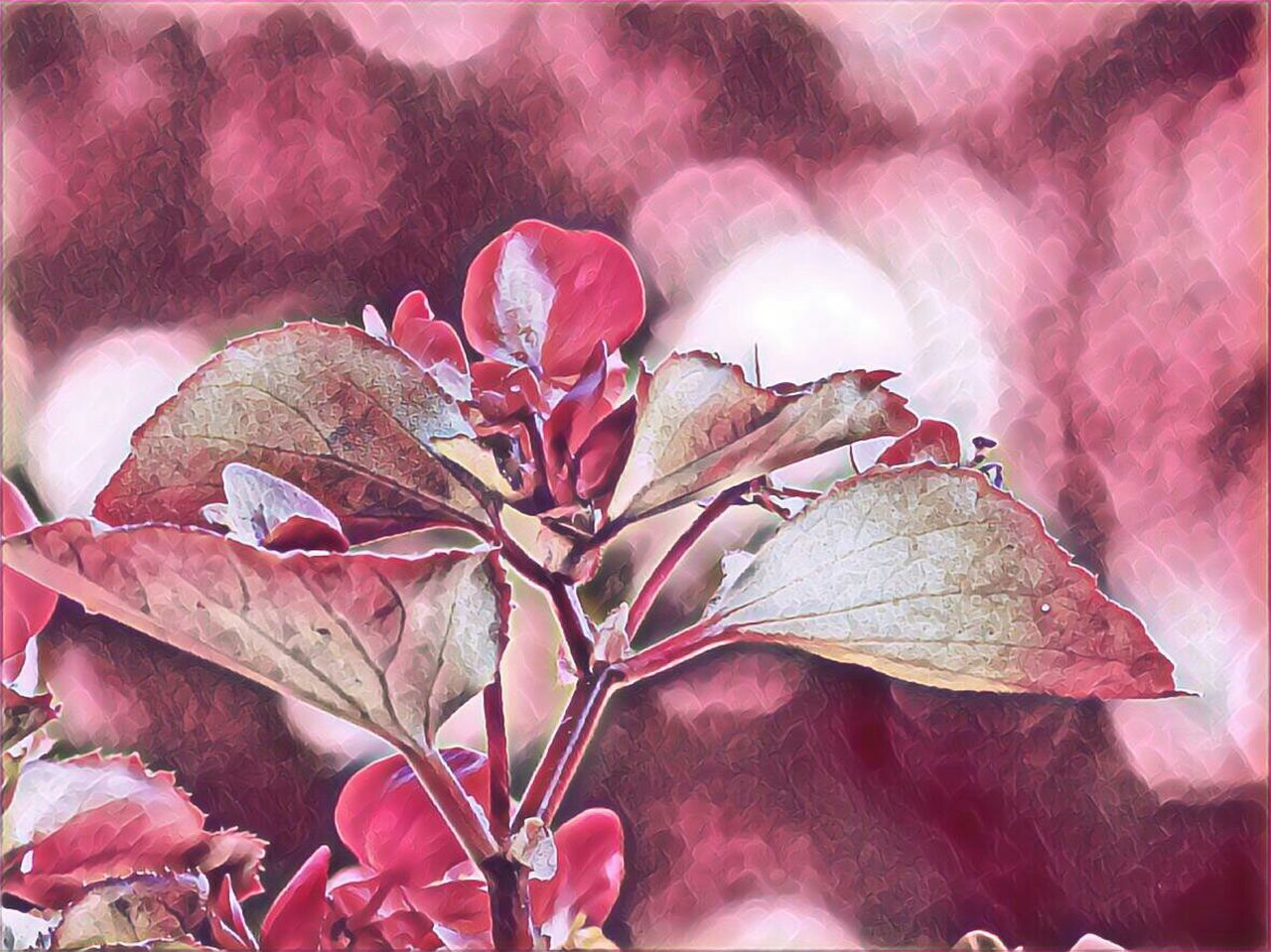 dry, leaf, nature, fragility, outdoors, change, day, beauty in nature, red, no people, pink color, autumn, close-up, flower, flower head