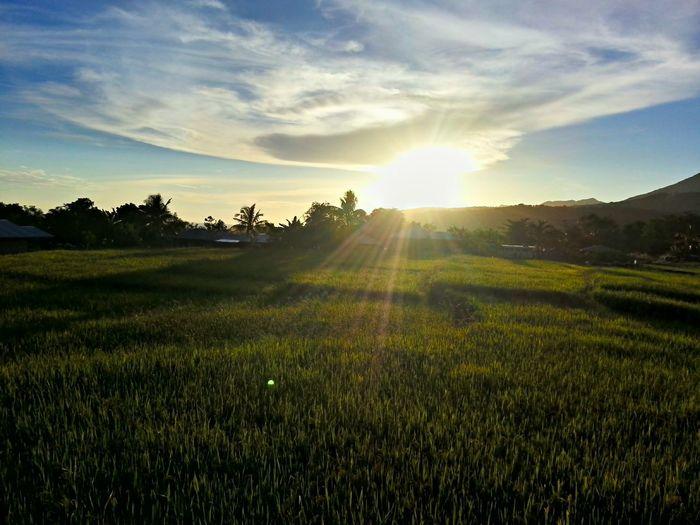 Sunlight streaming on grassy field