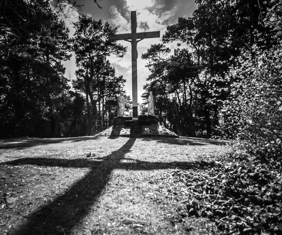 View from the rear of Calvary, St Pio's, Pantasaph, North Wales. Absence Architecture Blackandwhite Built Structure Calvary Cross Day Empty Footpath Growth Monochrome No People North Wales Outdoors Shadow Sky Street Sunlight The Way Forward Tree Tree Trunk Showcase April