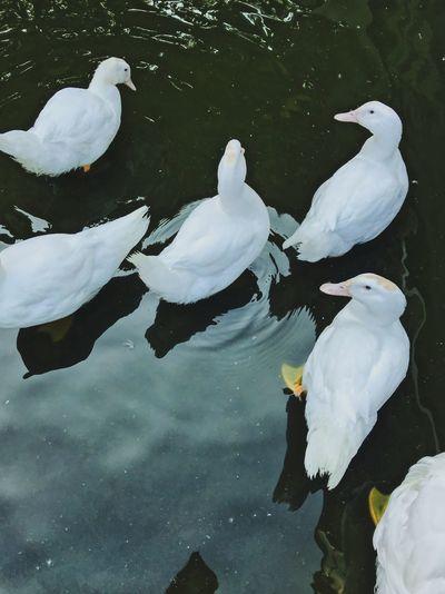High angle view of birds flying over lake