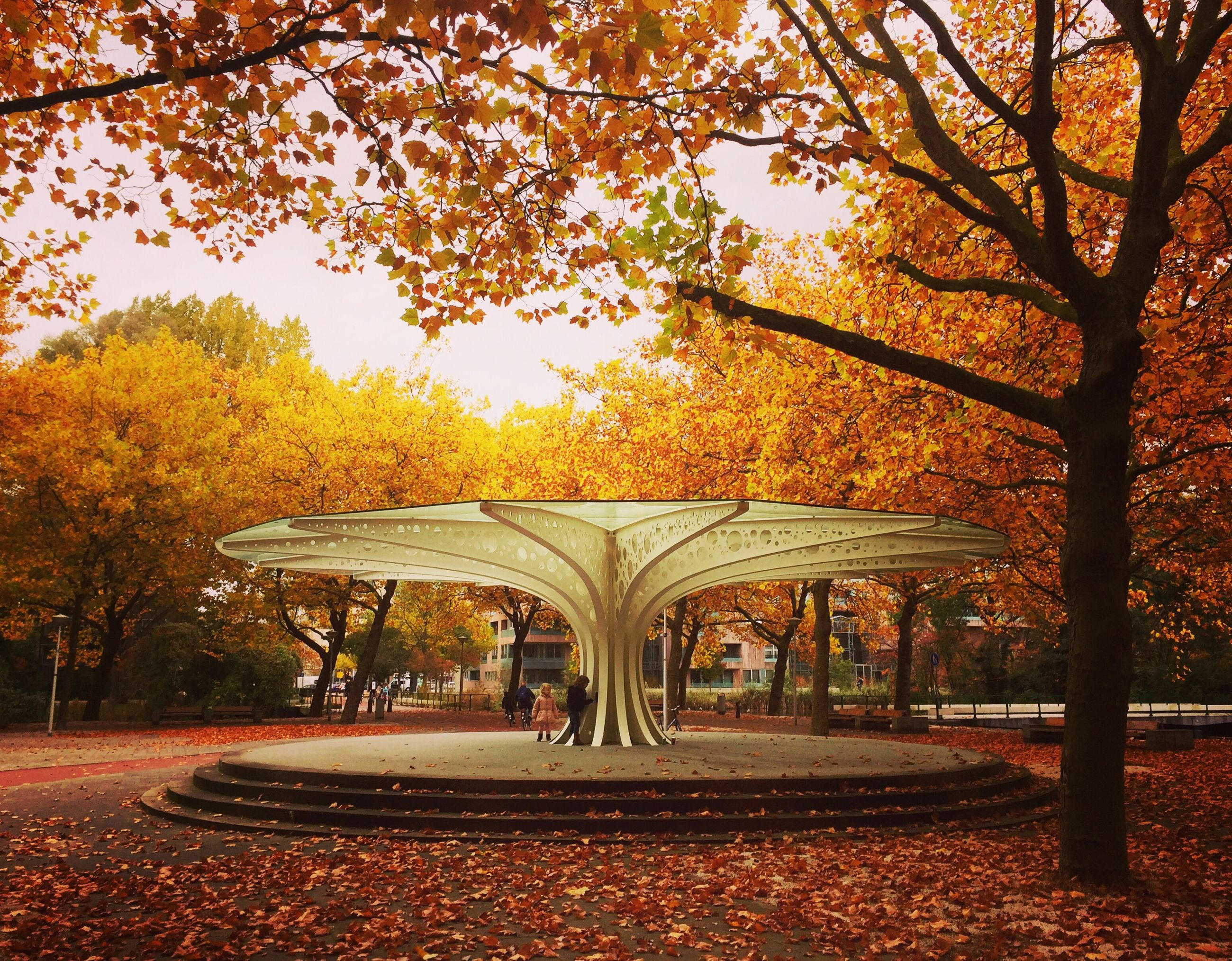 tree, autumn, yellow, outdoors, no people, sunset, building exterior, architecture, pavilion, nature, sky, day