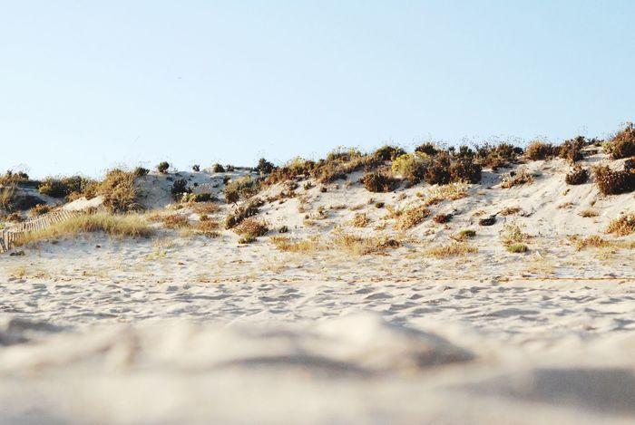 """A day at the Beach"" Beach Sand Dunes"