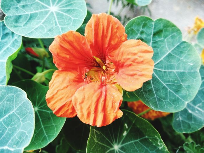 Flower Head Flower Leaf Close-up Plant Animal Themes Plant Life Botany Blossom In Bloom Blooming Leaf Vein Focus