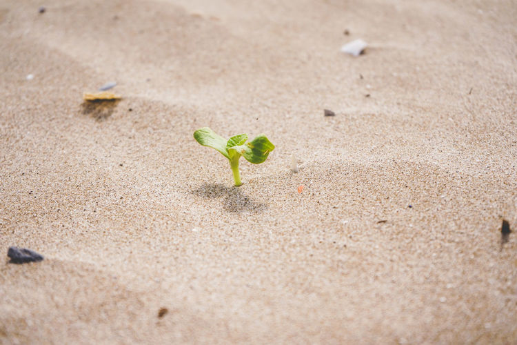 Close-up of small plant growing on sand