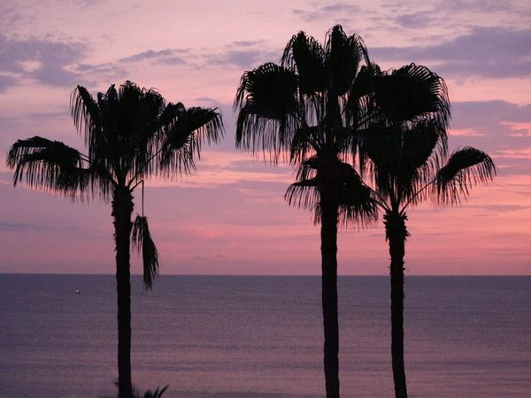 Palm Tree Sunset Silhouette Tropical Climate Backgrounds Sky EyeEm Selects Landscape Tranquility Sea Vacations