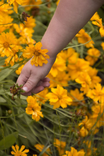 Beauty In Nature Blooming Blooming Flower Close-up Day Deadhead Deadheading Flower Flower Head Fragility Freshness Garden Flowers Gardening Grooming Growth Hand Human Hand Nature Outdoors Petal Picking Picking Flowers  Plant Yellow