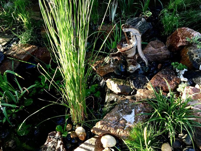Nature Growth No People Outdoors Plant Day Grass Beauty In Nature Close-up Waterdrops Green Color Water Reflections Plants And Flowers Rock Pond Fountain Fountain_collection Gardens Rock - Object Tranquility Garden Photography Garden Stone - Object Beauty In Nature