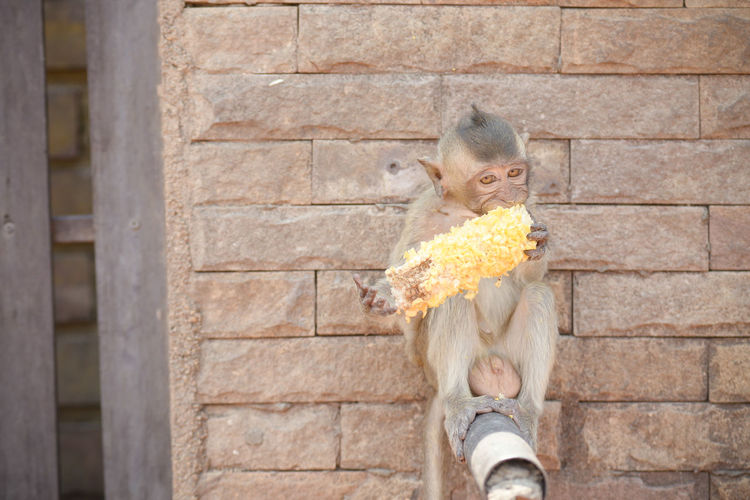Monkey Obsess  Care Love Day Family, Clan, House, Hearth, Brood, Fireside Fondant  Mammal