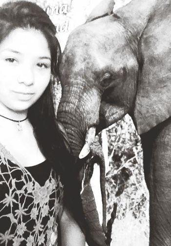 Elephantlover <3