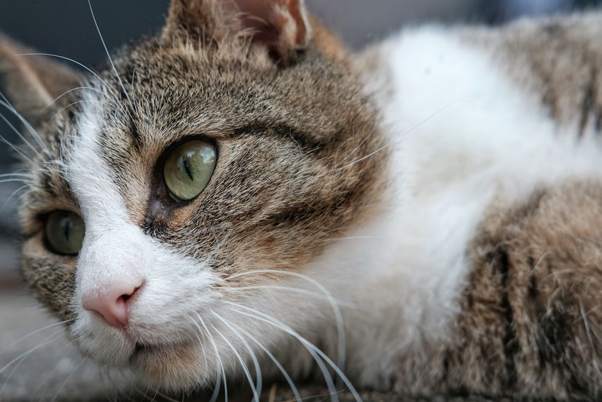 EyeEm Selects Pets Portrait Feline Domestic Cat Looking At Camera Animal Hair Close-up Whisker Cat