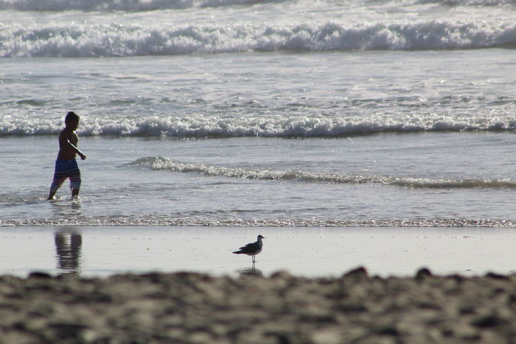 Beach Sea Sand Wave Water Vacations Nature Silhouette Outdoors Day People One Person Motion Oceanside Sunlight Wave Oceanside, Ca Breaking Wave Travel Destinations Seagull