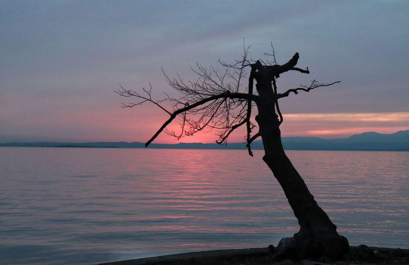 sunset EyeEmNewHere Italy Lake Garda Lake Lazise Plant Pinklake Pink
