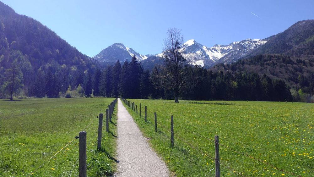 Kössen in Spring Agriculture Field Mountain Beauty In Nature Nature Landscape Scenics Tree Outdoors Grass Freshness Day