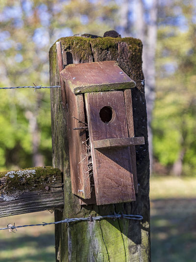 No-ones home! Focus On Foreground Wood - Material Birdhouse Day Nature Outdoors Weathered Tree Protection Wooden Post Wildlife Home Bird House Birdwatching Fencepost Hagitat Autumn Damaged Boundary Metal