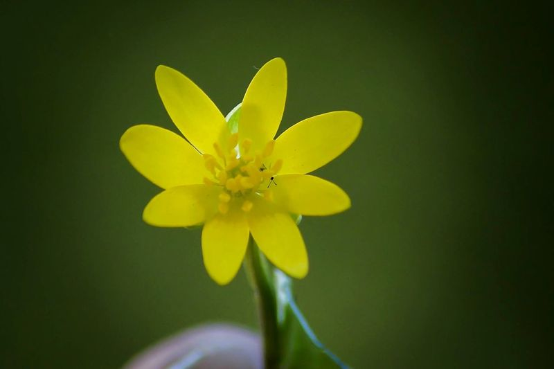 Flower Growth