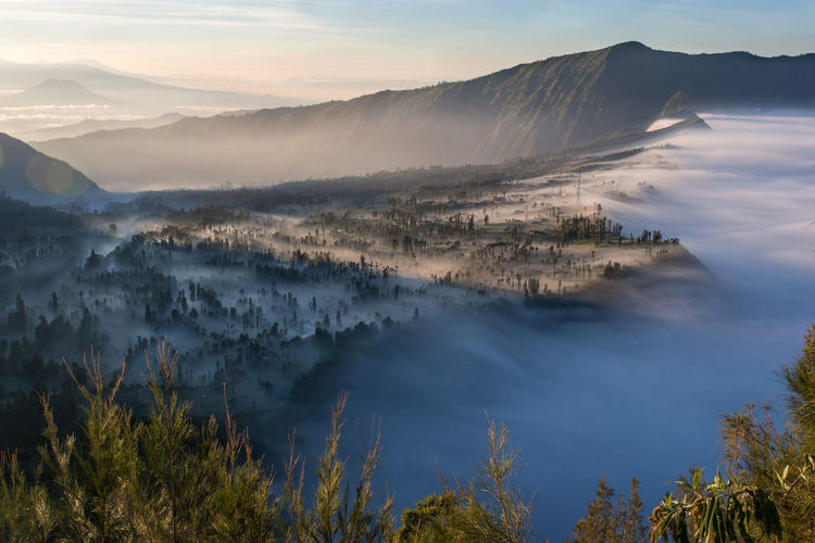 Morning at Bromo Mountain Beauty In Nature Sky Cloud - Sky No People Tree Fog Day