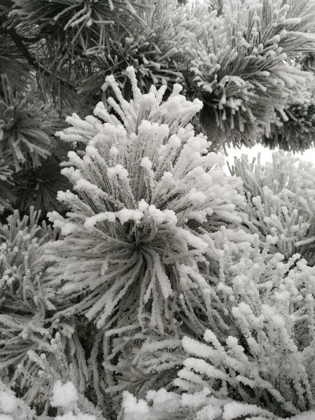 Struktur Cold Temperature Beauty In Nature Needle - Plant Part Eyeem Photography Lines A Moment Tadaa Comunity Fine Art Photograhy Fine Art Photography Bnw The Purist (no Edit, No Filter) Exceptional Photographs Nature Photography From My Point Of View Abstract Photography EyeEm Nature Lover Tadaa Community Tranquility Frozen Winter Eyemphotography P9 Huawei Beauty In Nature Low Angle View The Great Outdoors - 2017 EyeEm Awards EyeEmNewHere Shades Of Winter HUAWEI Photo Award: After Dark
