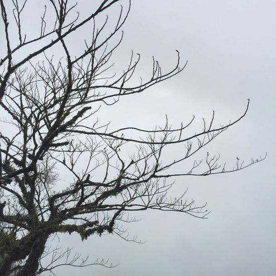 Enjoy the fog Weather Dry Winter Cold Life Fog Wlodsimier Sky Environment Overcast Nature Natural Forest Rainforest Landscape Branch Larch Tree Plant Nest Wood Twigs Pattern Color Green