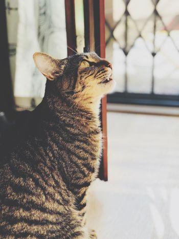 EyeEm Selects Animal Themes Animal One Animal Mammal Vertebrate Domestic Animals Domestic Close-up Cat Feline Pets