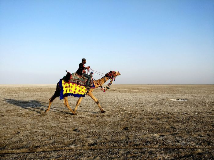 @Great Rann Of Kutch Rann Of Kutch Riding Sand Outdoors Desert Sky Nature Rural Scene Sand Dune