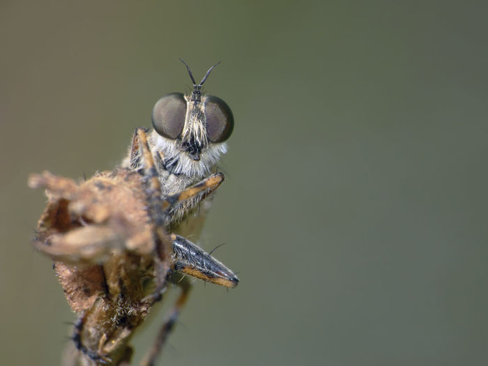 Close-up of insect on wilted plant