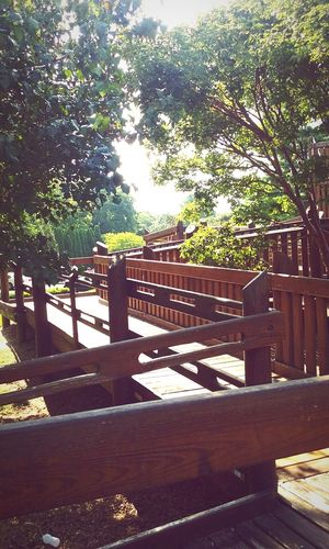 Escape Tree Sunlight Railing Branch Tranquility Day Nature Outdoors Green Color Footpath No People