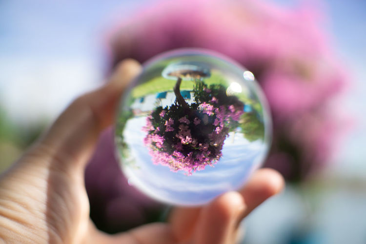 Cropped hand holding crystal ball against blooming flowers